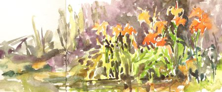Tiger Lilies, plein air watercolor sketch in Moleskine sketchbook.