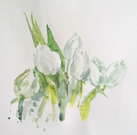 white tulips, watercolor study from direct observation